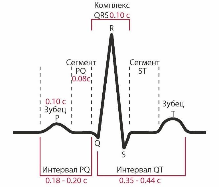 Синусовый ритм сердца норма у взрослых мужчин - крепкоездоровье