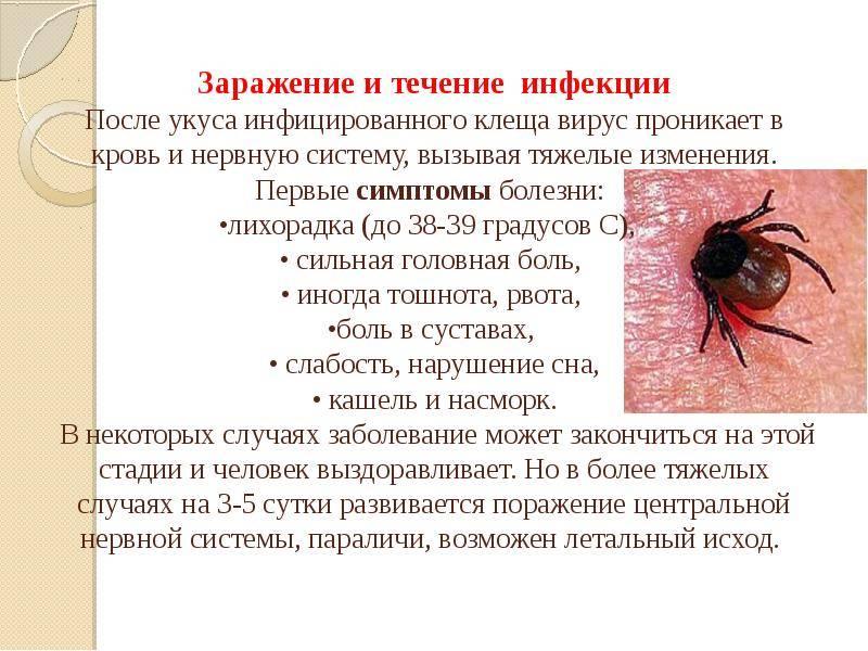 Болезнь лайма антибиотики: схема лечения заболевания