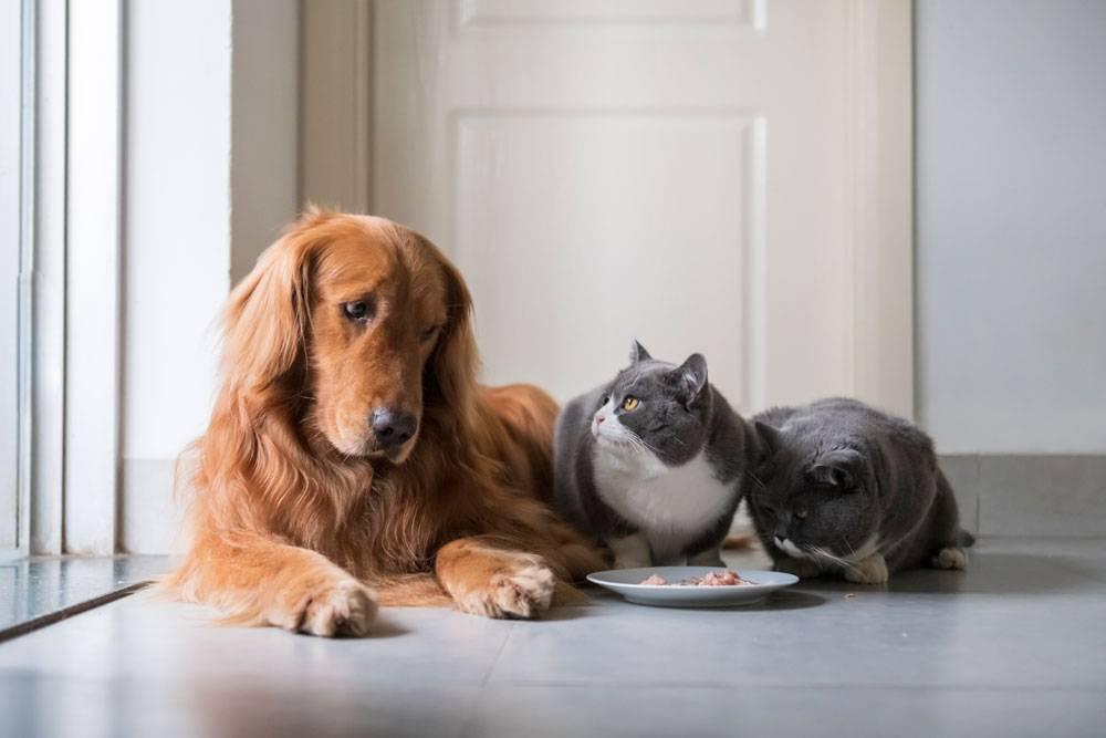 Болеют ли животные коронавирусом covid-19?