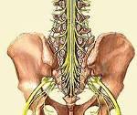 Синдром конского хвоста у человека: причины, симптомы и методы лечения