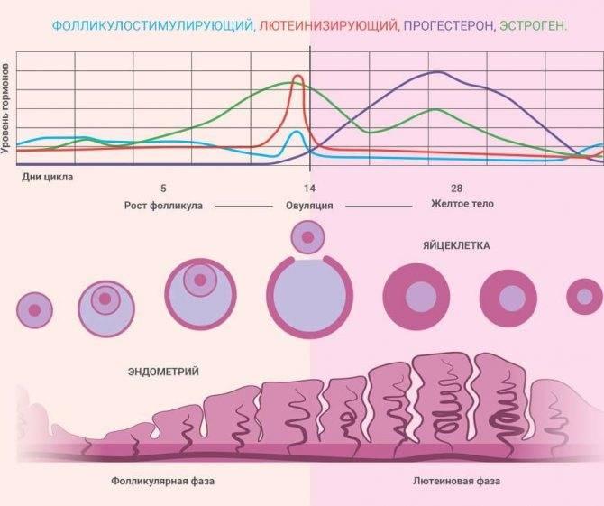 Норма прогестерона в лютеиновой фазе - что это значит