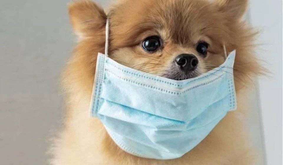 Коронавирусные инфекционные болезни кошек