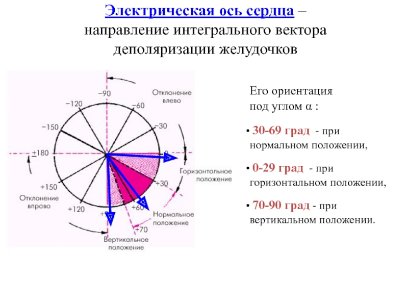 Определение угла альфа на экг таблица — сердце
