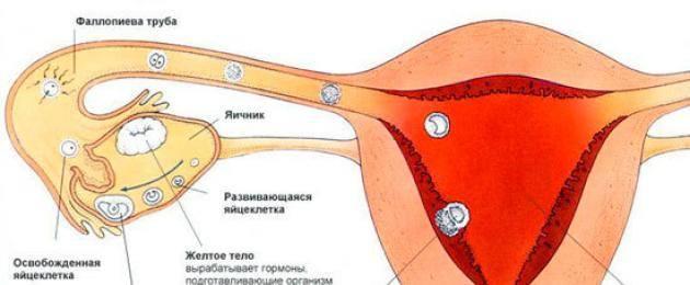 Через сколько дней начинает болеть грудь после зачатия