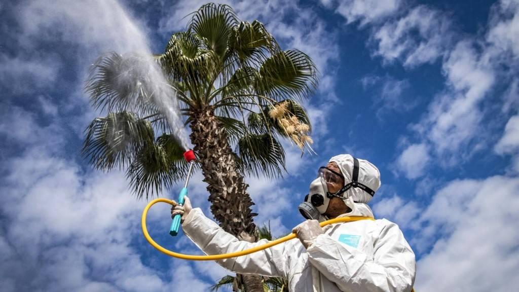 Убьет ли коронавирус летняя жара? - bbc news русская служба