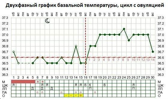 Как определить овуляцию: признаки, календарный метод, узи, тесты / mama66.ru