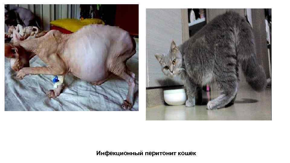 Болеют ли кошки и собаки коронавирусом