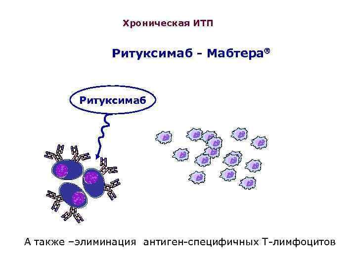 Идиопатическая тромбоцитопеническая пурпура (итп) у взрослых. клинические рекомендации - в здоровье сила