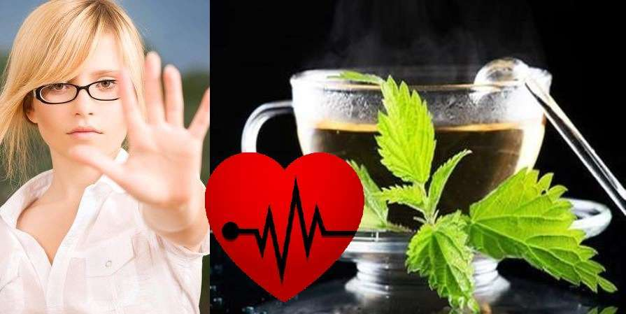 Крапива: лечебные свойства и противопоказания в гинекологии