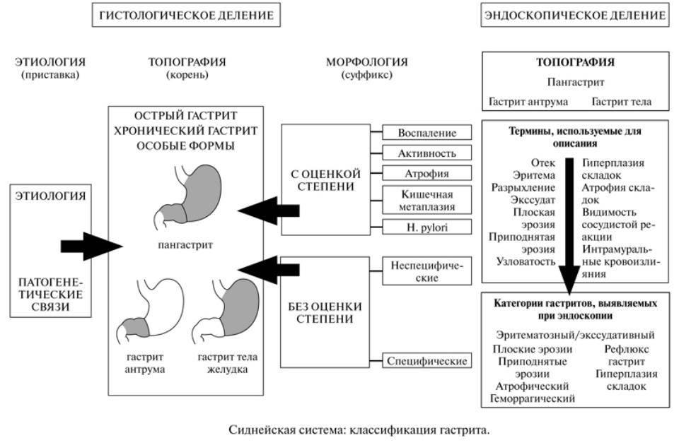 Аутоиммунный гастрит: симптомы, лечение