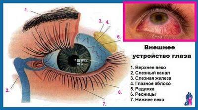 Почему болят глаза при простуде (что делать если больно двигать глазами)
