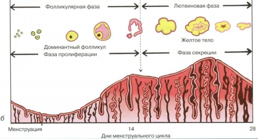 Каковы показатели нормы прогестерона в лютеиновой фазе?