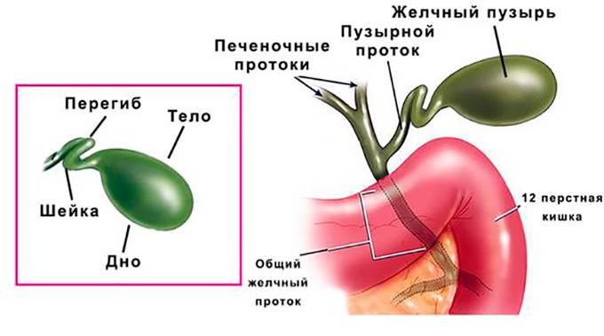 Загиб желчного пузыря симптомы и лечение народными средствами