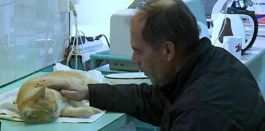 ? коронавирус у кошек - экспресс газета