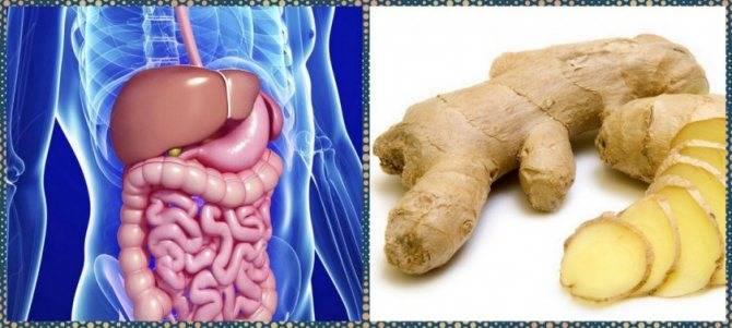 Можно ли имбирь при панкреатите, гастрите, язве желудка и пищевых отравлениях