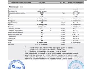 Лейкоциты в моче повышены: причины у женщин и мужчин, что значит лейкоцитарная эстераза, норма и патология