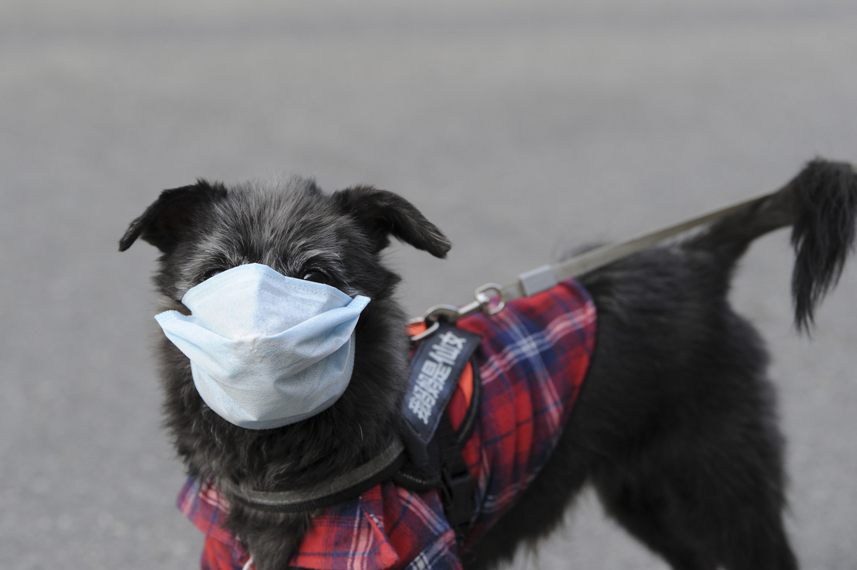 Коронавирус у собак: болеют ли, симптомы и лечение, могут ли заразиться от человека
