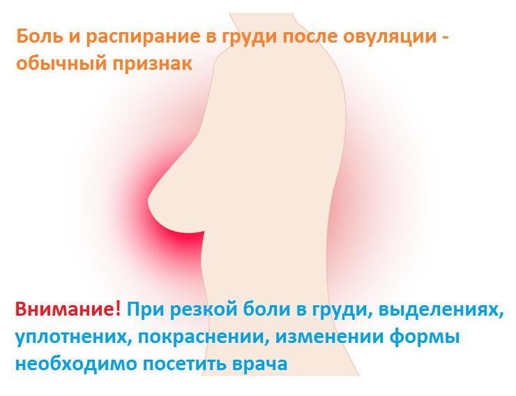 Боли после овуляции как признак беременности
