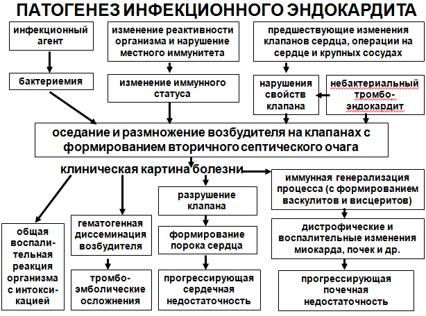 1.миокардиты: этиология, патогенез. классификация.
