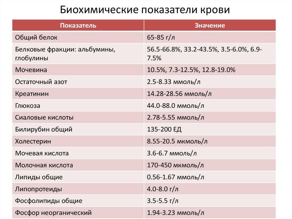 Биохимический анализ крови: норма и таблица расшифровки результатов - мое здоровье