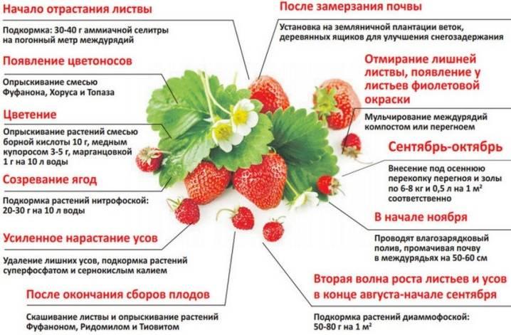 Какие ягоды и фрукты можно есть при атрофическом гастрите