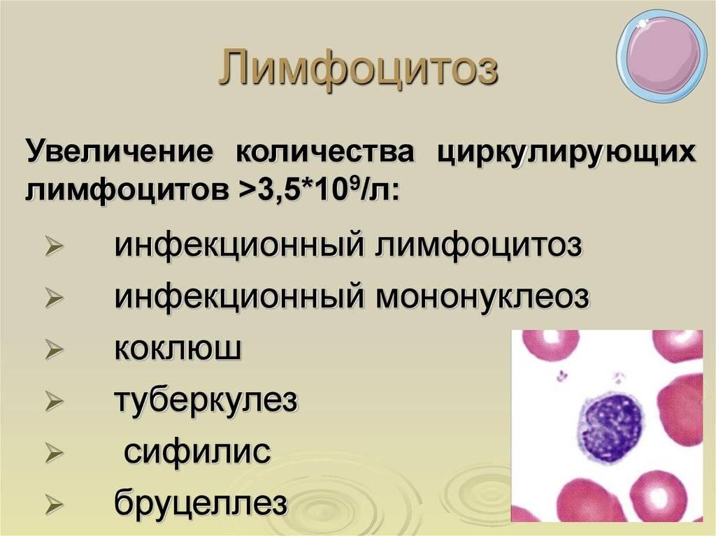 Повышены лимфоциты в крови у ребенка: о чем это говорит, основные причины увеличения у грудничка до года