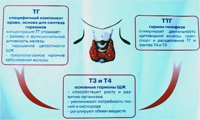 Гормон ттг после удаления щитовидной железы