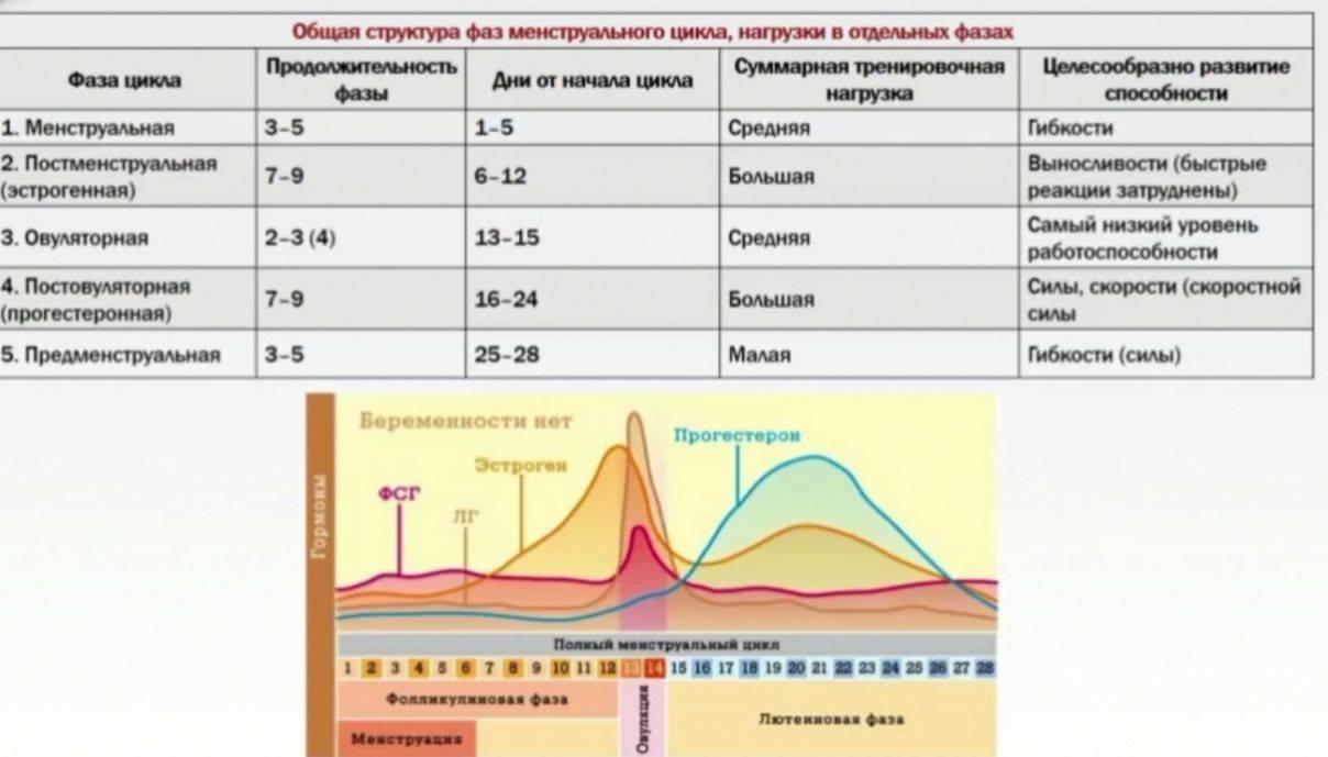 Лютеиновая фаза прогестерон: норма, анализ, основные показатели