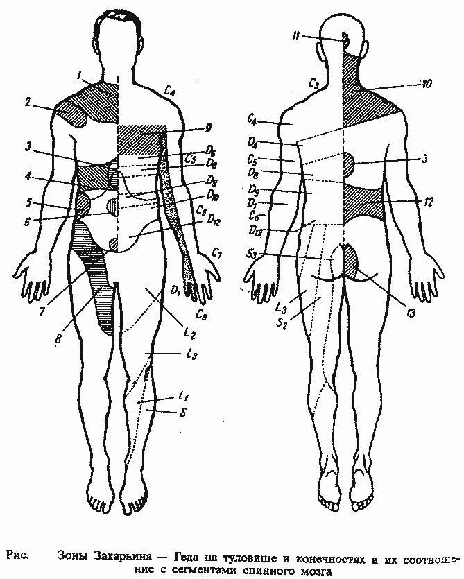 Результаты действия сегментарного массажа. массаж. уроки великого мастера