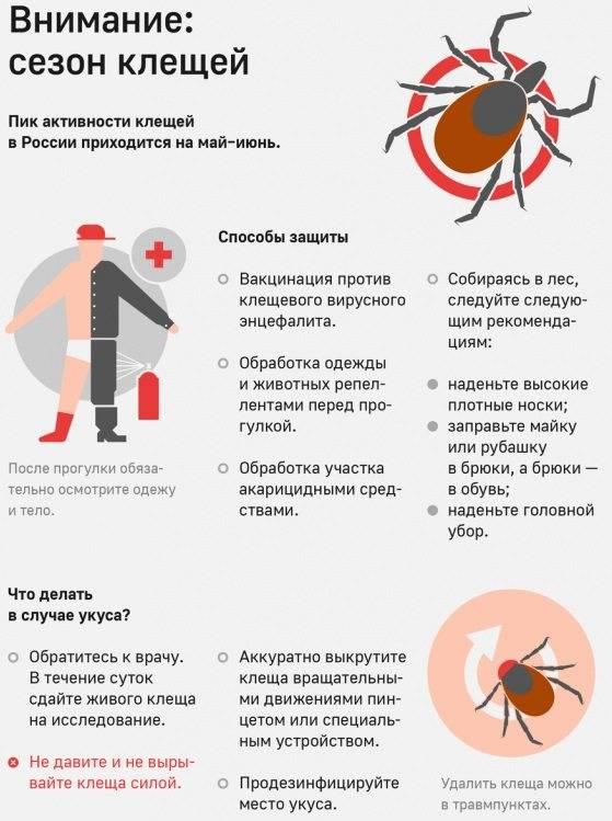 Что такое болезнь лайма (клещевой боррелиоз). фото