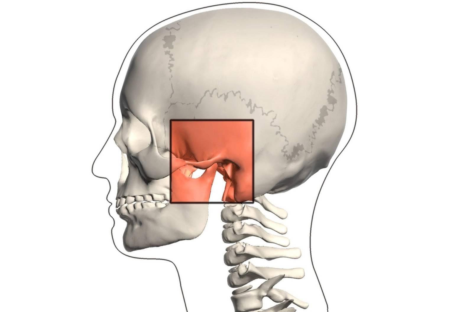 Почему сводит челюсть (скулы на лице) - 5 причин онемения | spravki1.ru