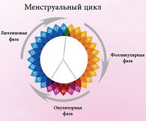 Уровень гормонов по дням и фазам менструального цикла у женщины