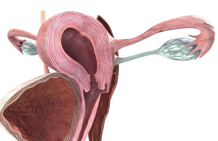 Серозометра в постменопаузе - что это такое, лечение | климакс 24