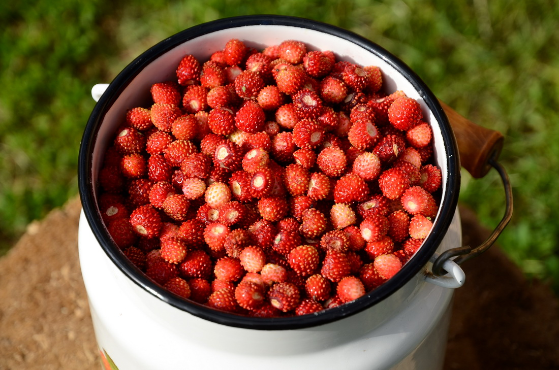Какие фрукты можно при гастрите