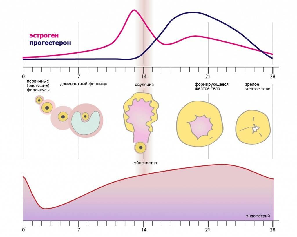 Норма прогестерона в лютеиновой фазе (низкий, высокий уровень)