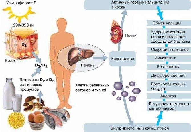 Анализ крови на витамины: что показывает комплексный тест, его виды и нормы