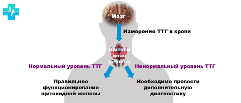 Норма ттг после удаления щитовидной железы
