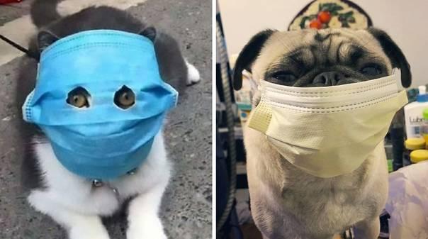 Как болеют животные коронавирусом   коронавирус сегодня