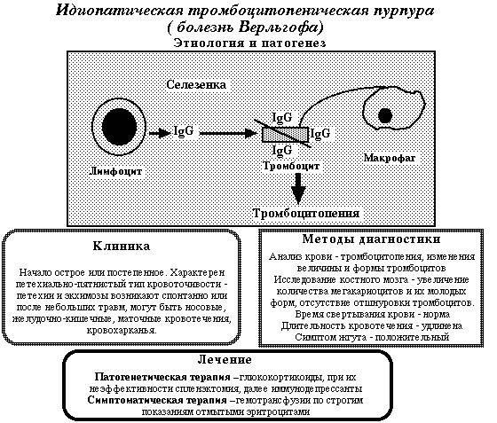 Пурпура тромбоцитопеническая: что это такое, описание симптомов, лечение, прогноз