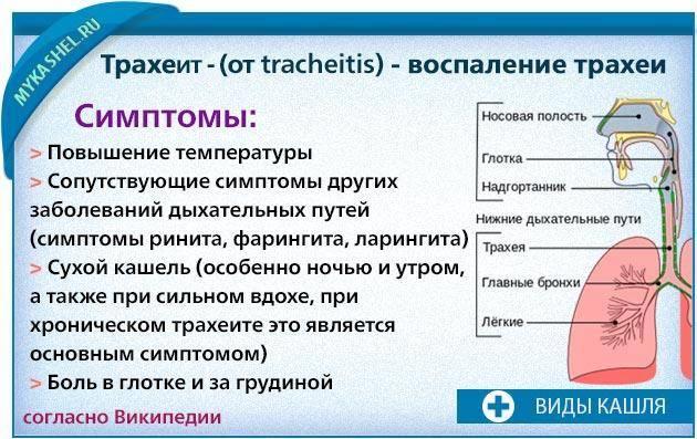 Жесткий кашель у ребенка лечение