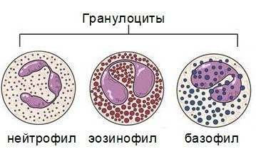 В анализе крови у ребенка повышены лимфоциты – причины