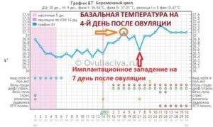 Базальная температура при овуляции (17 фото): график овуляции – как измерять бт и какая должна быть бт, если произошло оплодотворение при нормальной овуляции, как определить овуляцию по базальной температуре