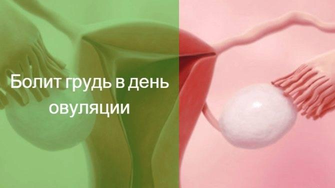 Болит грудь после овуляции до месячных: причины