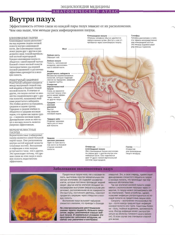 Причины и лечение воспаления гайморовых пазух (гайморита)