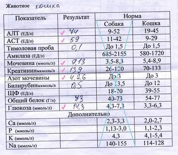 Норма холестерина в крови: таблица по возрасту и полу с расшифровкой