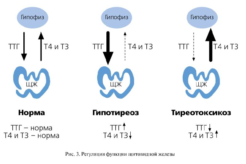 Повышен т4 после удаления щитовидной железы