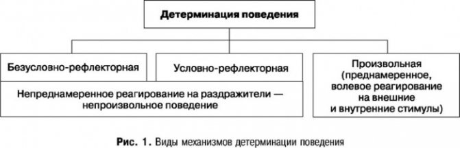 Определение и примеры принципа детерминизма в психологии