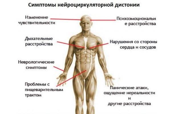 Вегетососудистая дистония (всд) симптомы и методы лечение у мужчин и женщин в москве