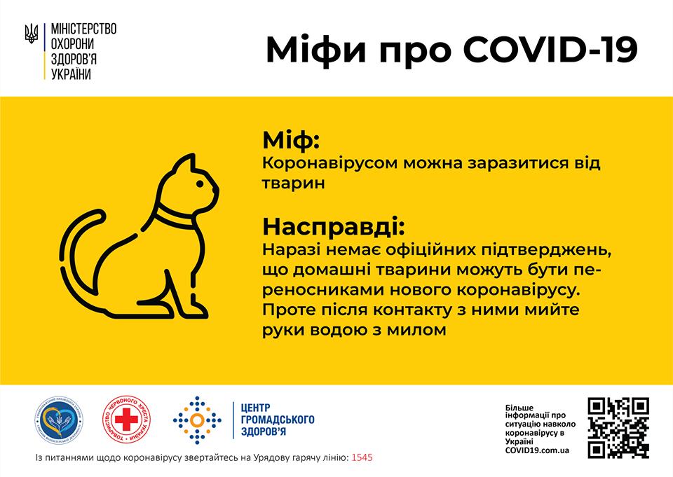Могут ли домашние животные болеть коронавирусом?