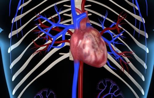 Кт сердца и коронарных сосудов: с контрастированием и без, мультиспиральная кт, стоимость, фото